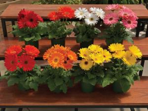 Растения, които пречистват и подобряват качеството на въздуха вкъщи | allergy.bg